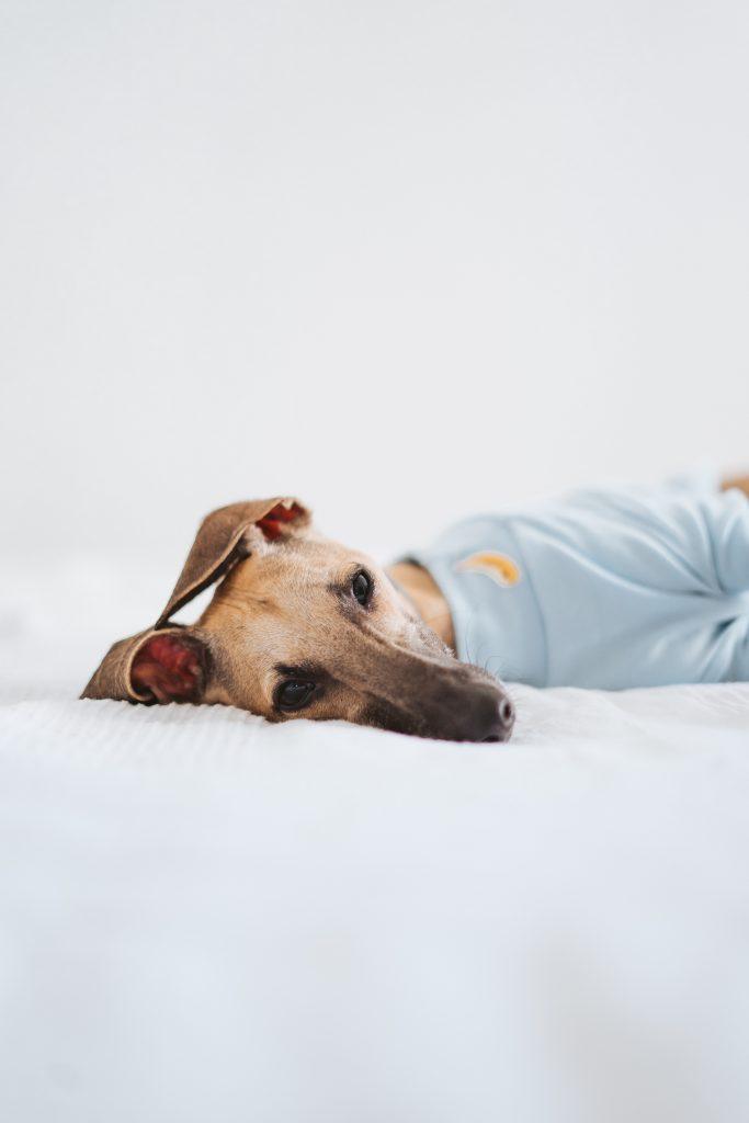 59 Tipps, die Ihnen helfen, sich um Ihren Hund zu kümmern