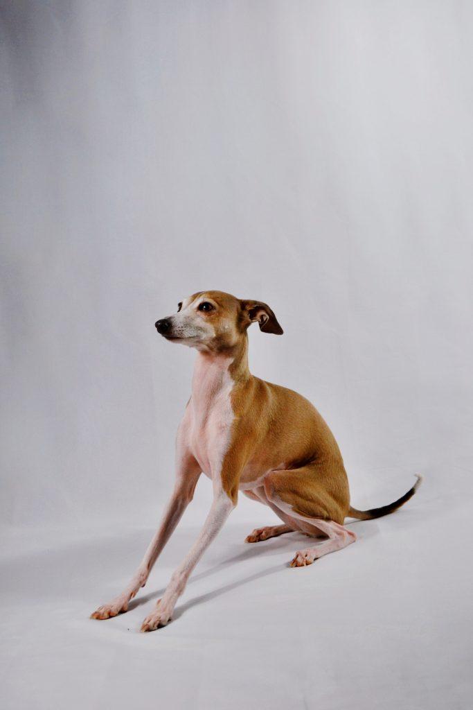 10 goldene (Kontakt-) Regeln für Hunde an der Leine